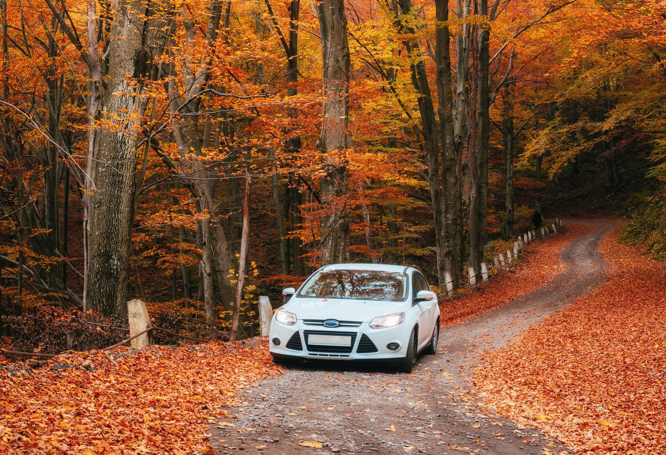 BLOG: Autumn driving tips | XLCR Vehicle Management Ltd